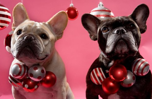 french-bulldog-holiday-ornaments-146786611