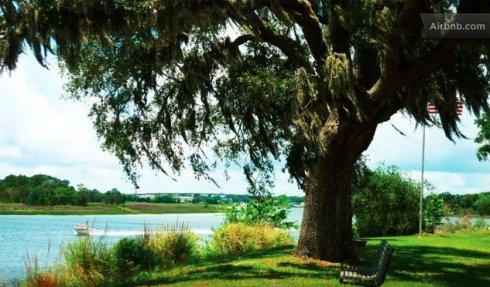 tbolt tree
